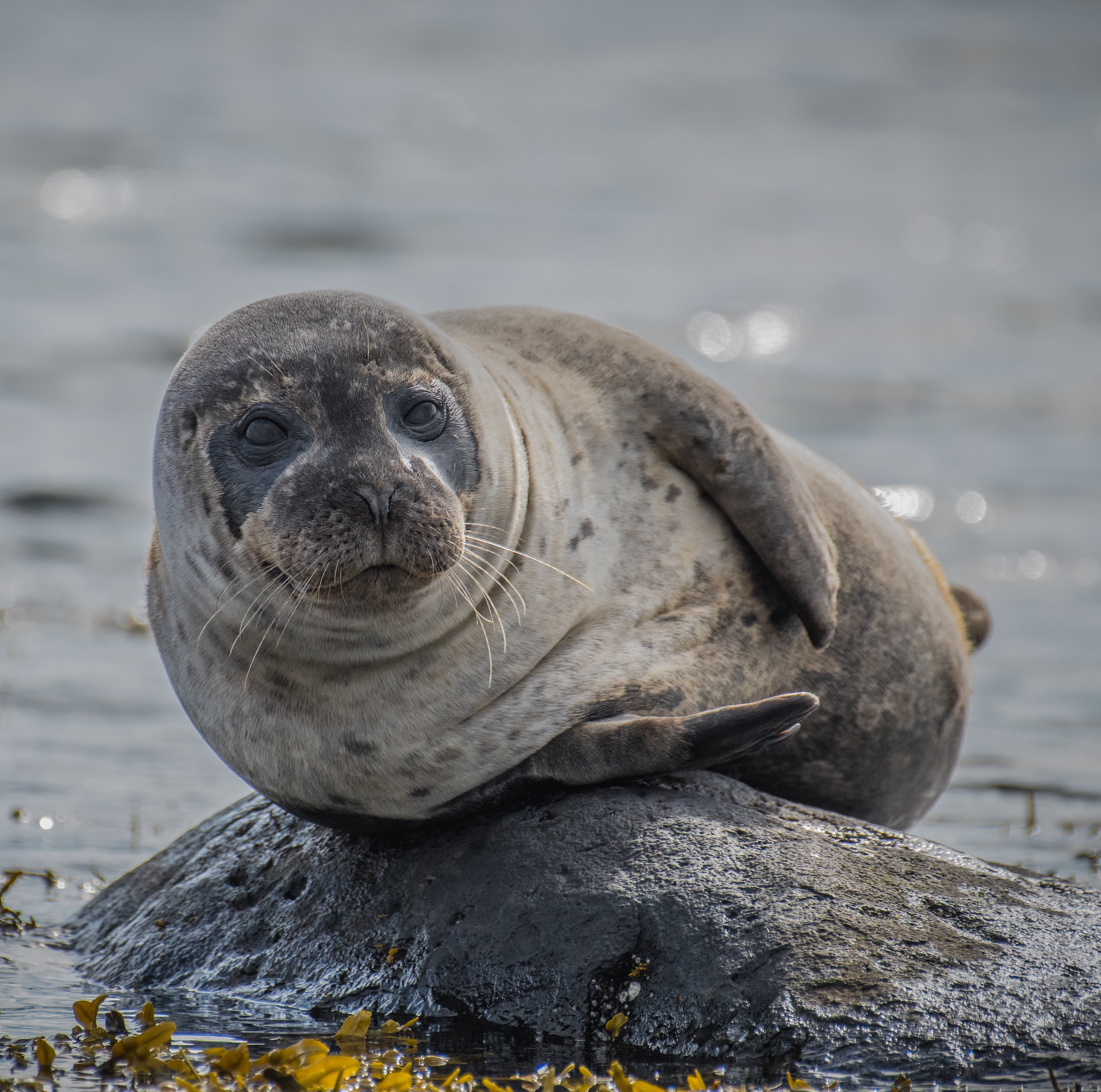 Seal Watching Boat Trips